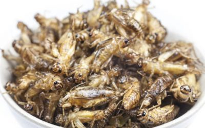 Insects still have 'yuck factor' for many despite being a sustainable alternative to meat